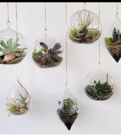 Wiszące Szklane Doniczki Gdzie Kupić Kwiaty Kaktusy